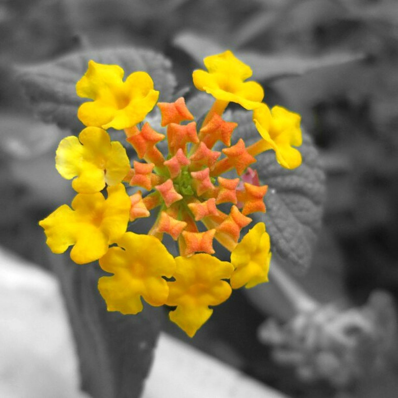 flower, yellow, petal, plant, growth, vibrant color, fragility, day, springtime, outdoors, no people, nature, beauty in nature, flower head, freshness, close-up, blooming