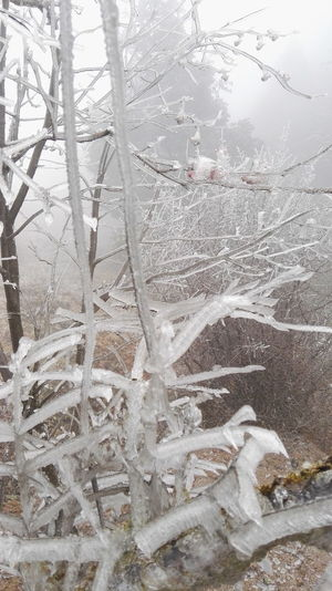 冰树 Cold Temperature Winter Snow Ice Frozen Nature Frost