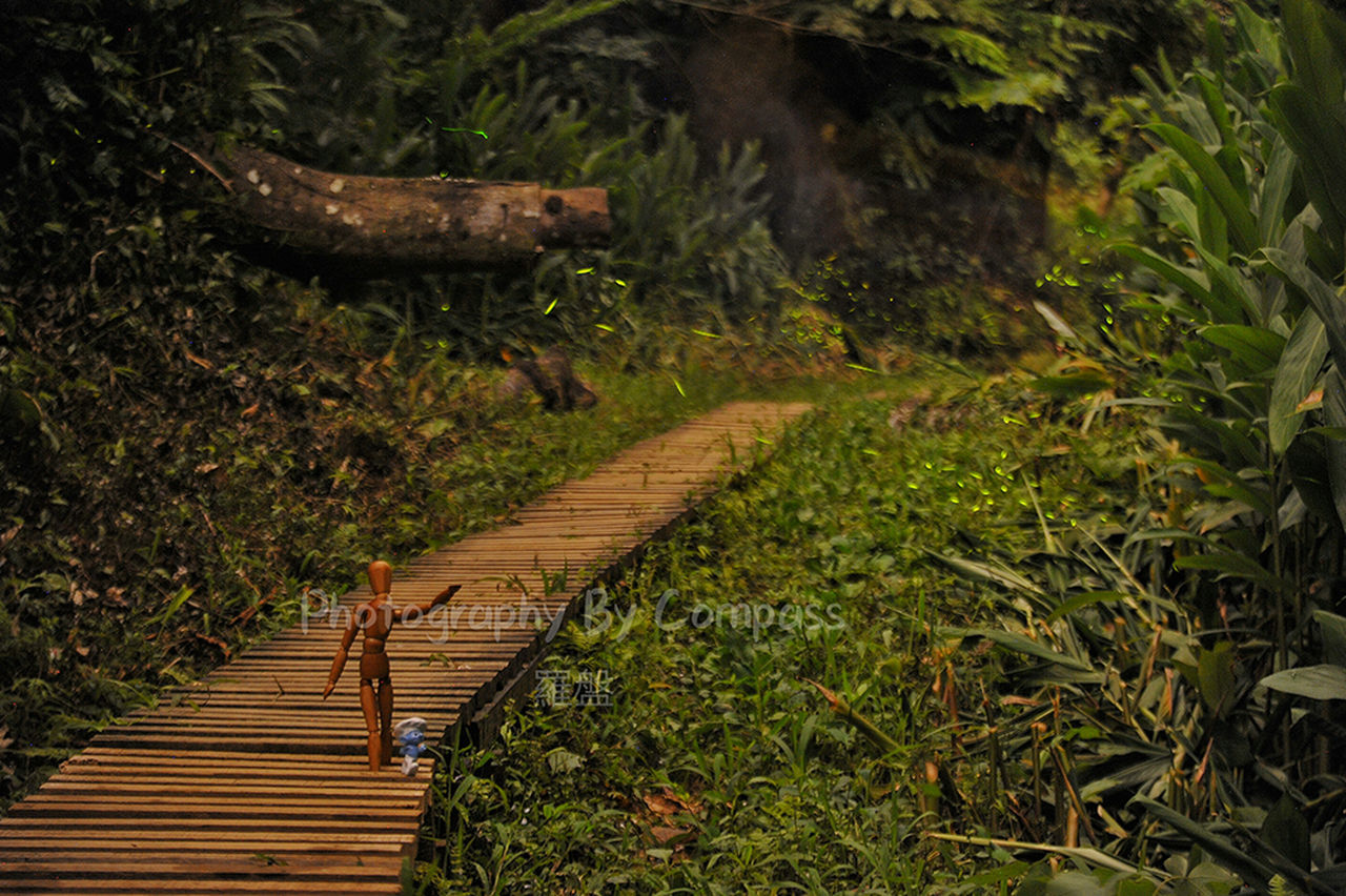 nature, wood - material, outdoors, no people, tranquility, plant, day, beauty in nature