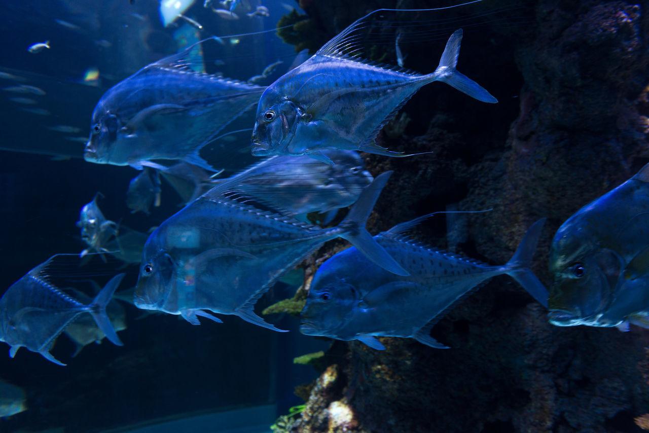 Fishes Aquarium Translucent Transparent Water Tank Marine Life