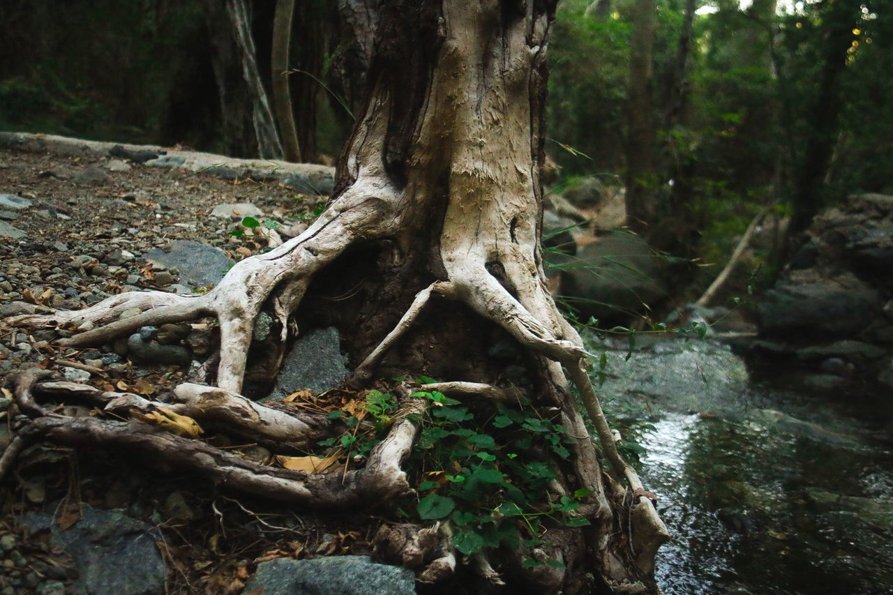 Tree Tree Trunk Nature Root Forest Tranquility Outdoors No People Growth Driftwood Beauty In Nature Snag Canon Canon 70d Canonphotography Canon_photos Canon_official Nature Tree
