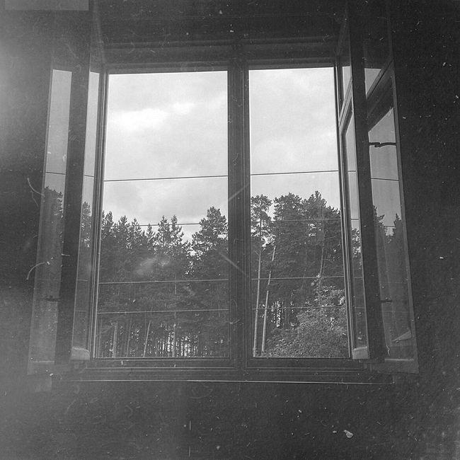 Monochrome Photography Window Indoors  Tree Window Frame No People Russia Ural Ekaterinburg B&w