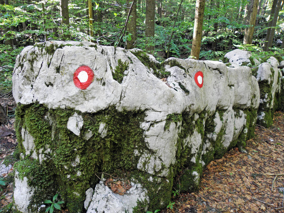 Golubinjak,Gorski kotar,nature details,Croatia,Europe,6 Adventure Climbing Croatia Day Eu Europe Forest Golubinjak Gorski Kotar Marcation Moss Nature Nature No People Outdoors Relaxation Rock - Object Sign Tracking Tree Tree Trunk