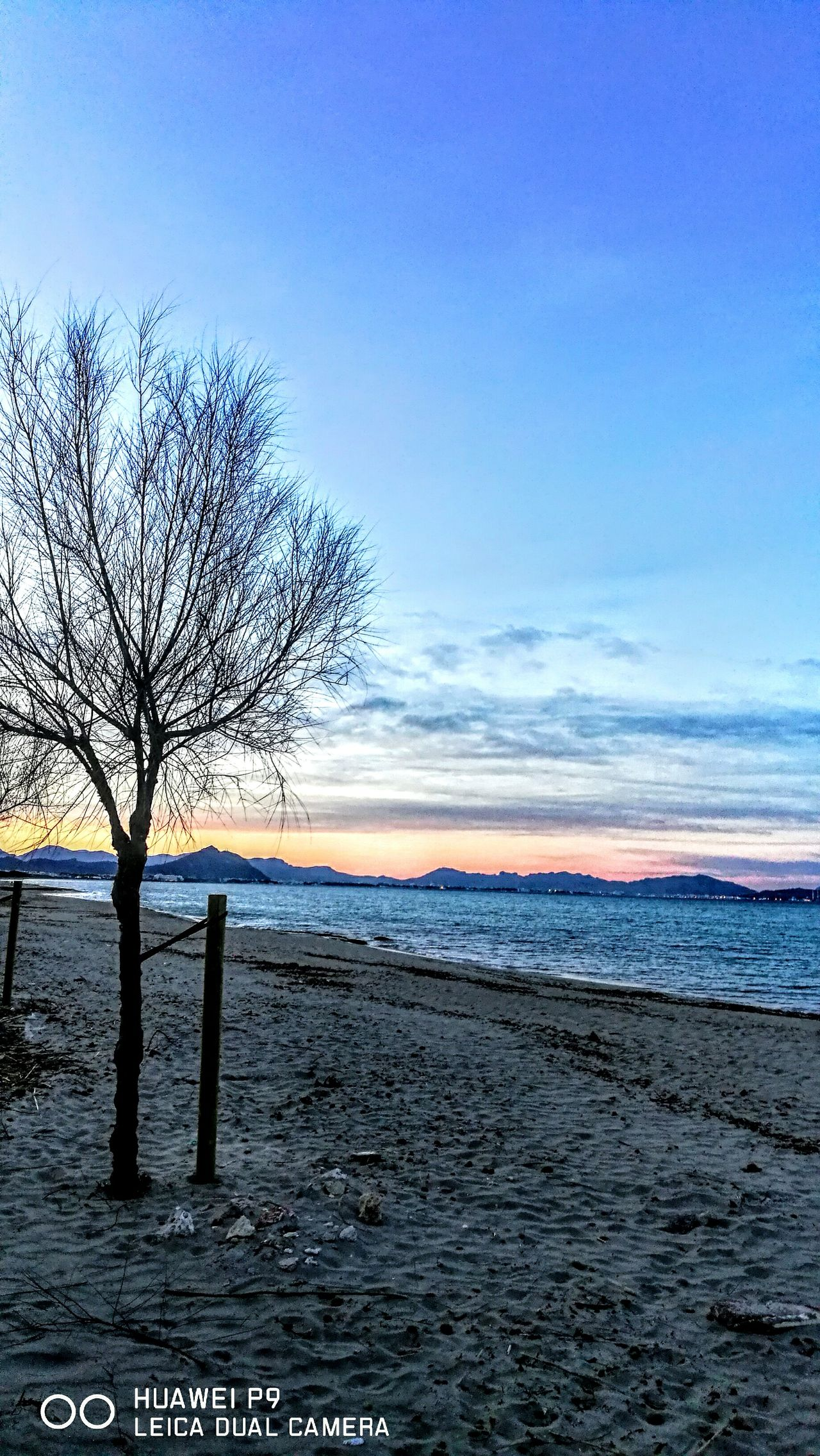 Trees at the beach in evening sky.... Sea Beach Nature Horizon Over Water Outdoors Sunset Tranquility Sand Wave Tranquil Scene Beauty In Nature Scenics GetbetterwithAlex PalmaDiMaiorca Originalpicture Tranquility