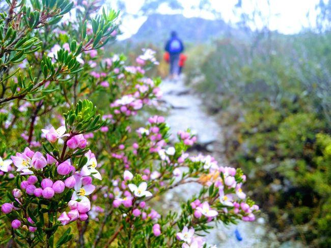 Life Bush Trail Beauty In Nature Australian Landscape EyeEmNewHere GALAXY S4