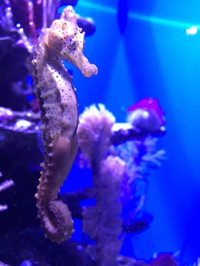 Blue Water Sea Life Swimming Underwater Aquarium Animal Themes Sea Nature One Animal Animals In The Wild Beauty In Nature No People UnderSea Sea Horse Enjoy The New Normal My Year My View What Who Where