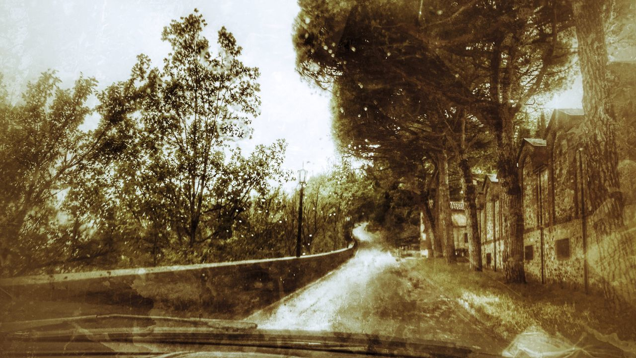 tree, transportation, road, car, windshield, motion, the way forward, no people, nature, day, growth, outdoors, water, beauty in nature, sky