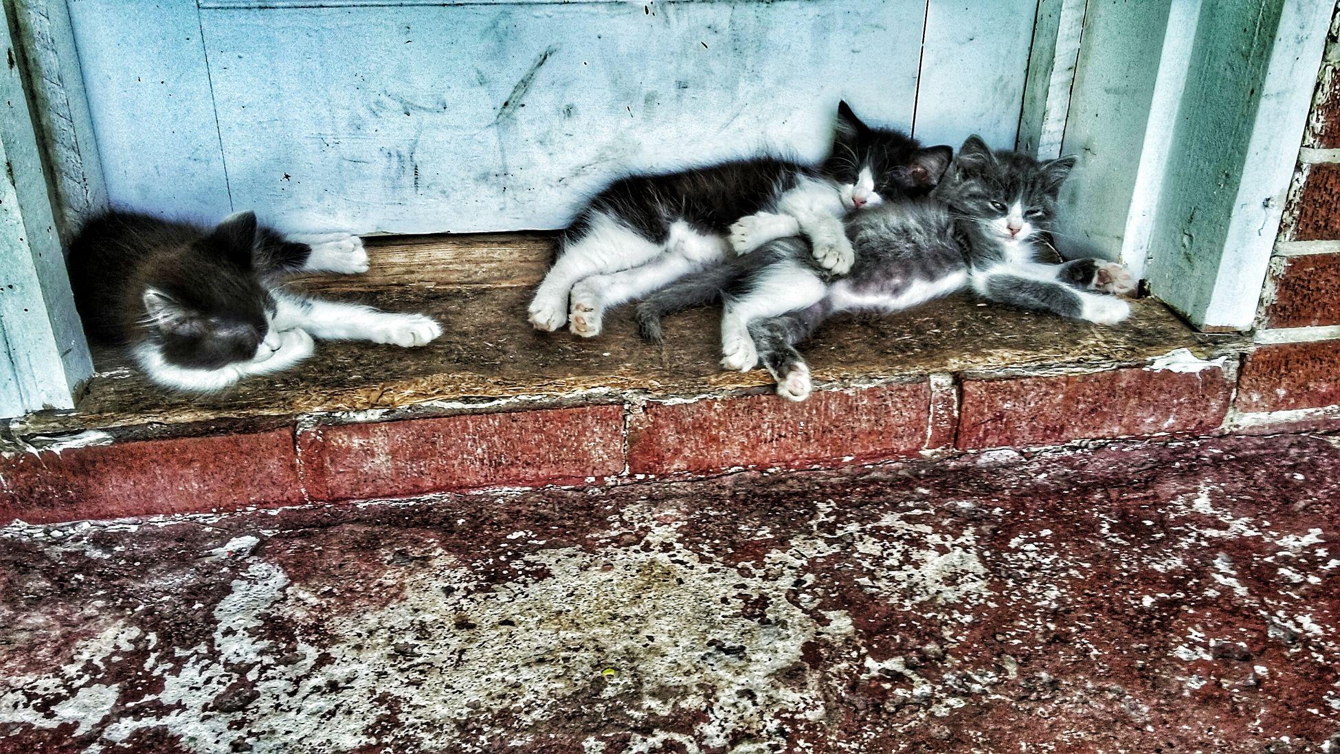 Sleepy Kittens Animallovers County House Random Photo Time Taking Photos EmmieC