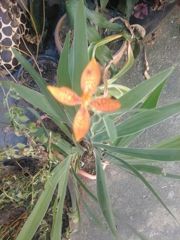 minha orquídea 05/05/14