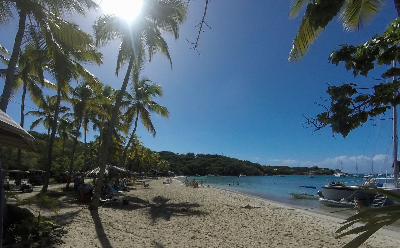 beach, sand, palm tree, sea, tree, nature, beauty in nature, sunlight, water, scenics, sky, tranquility, blue, day, outdoors, tranquil scene, vacations, clear sky, no people, nautical vessel, horizon over water