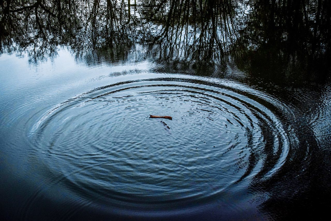one animal, animals in the wild, swimming, animal themes, water, lake, rippled, wildlife, water bird, high angle view, waterfront, animal wildlife, nature, bird, day, outdoors, no people, tree, swan, black swan
