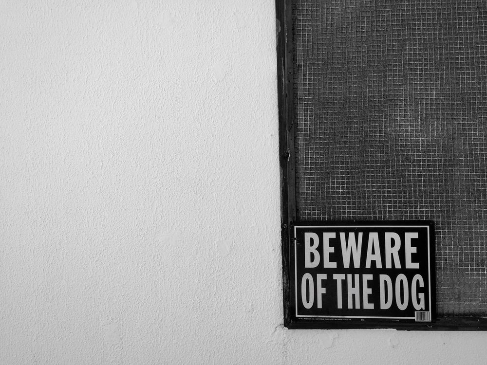 Beware Of The Dog Sign Windows Dog Frame Photo Photography Rota