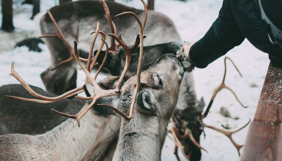 Beautiful stock photos of deer, Animal Themes, Animals In The Wild, Care, Cold Temperature