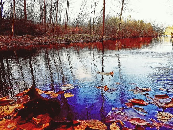 Water Day No People Outdoors Nature Bulrushes Landscape Autumn Orange Color Beauty In Nature Forest Leaf Tree Multi Colored Insects Beautiful Nature Atmospheric Mood A Peaceful Moment Colours Of Nature Perspectives On Nature
