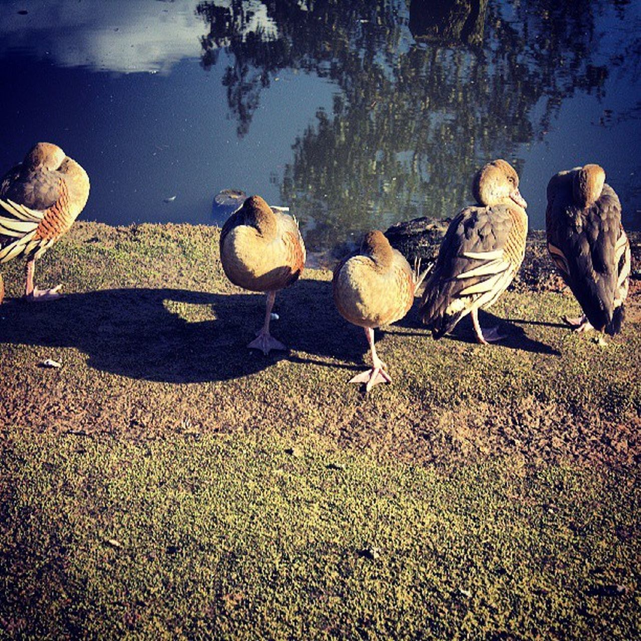 animals in the wild, animal themes, bird, animal wildlife, nature, water, lake, no people, outdoors, day, sunlight, large group of animals, perching