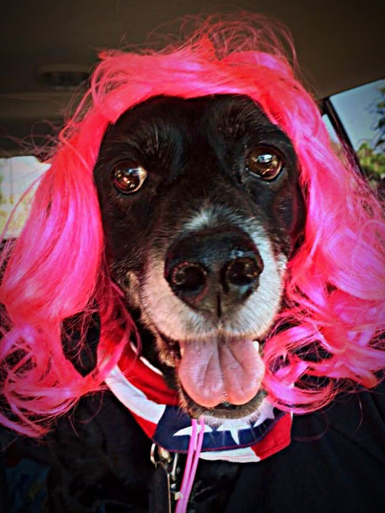 I Love Color❤️ Let Your Hair Down Colorsplash Cheese! Neon Pink Wig Dog In A Wig Love My Dog  Hello World Relaxing Hanging Out EyeEm Gallery Enjoying Life Taking Photos Check This Out That's Me EyeEm Best Shots Hair