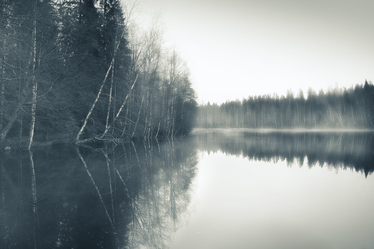 Scenic landscape grey and foggy day in southern Finland. Birch Birches Day Focus On Foreground Fog Gloomy Weather Grey Grey Sky Lake Landscape Leafless MIS Misty Nature No People Outdoors Peaceful Reflection Scenics Sky Standing Water Tranquil Scene Tree Trees Water