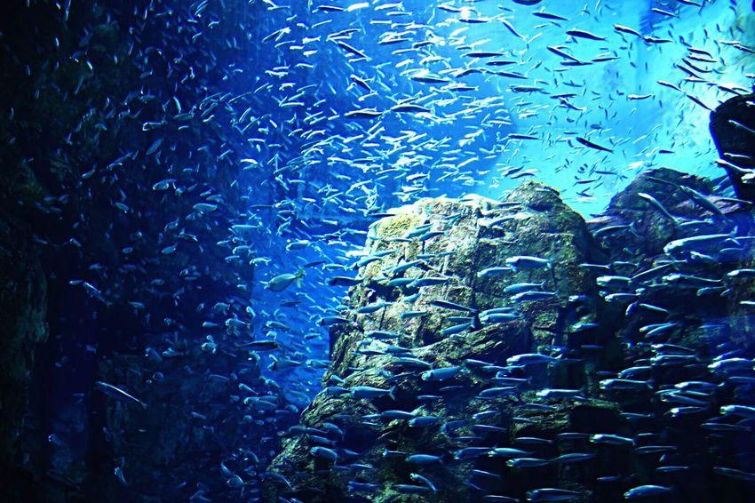 under the sea Sea Aquarium Fish Blue EyeEm Nature Lover Capture The Moment Showcase March Nikon Japan