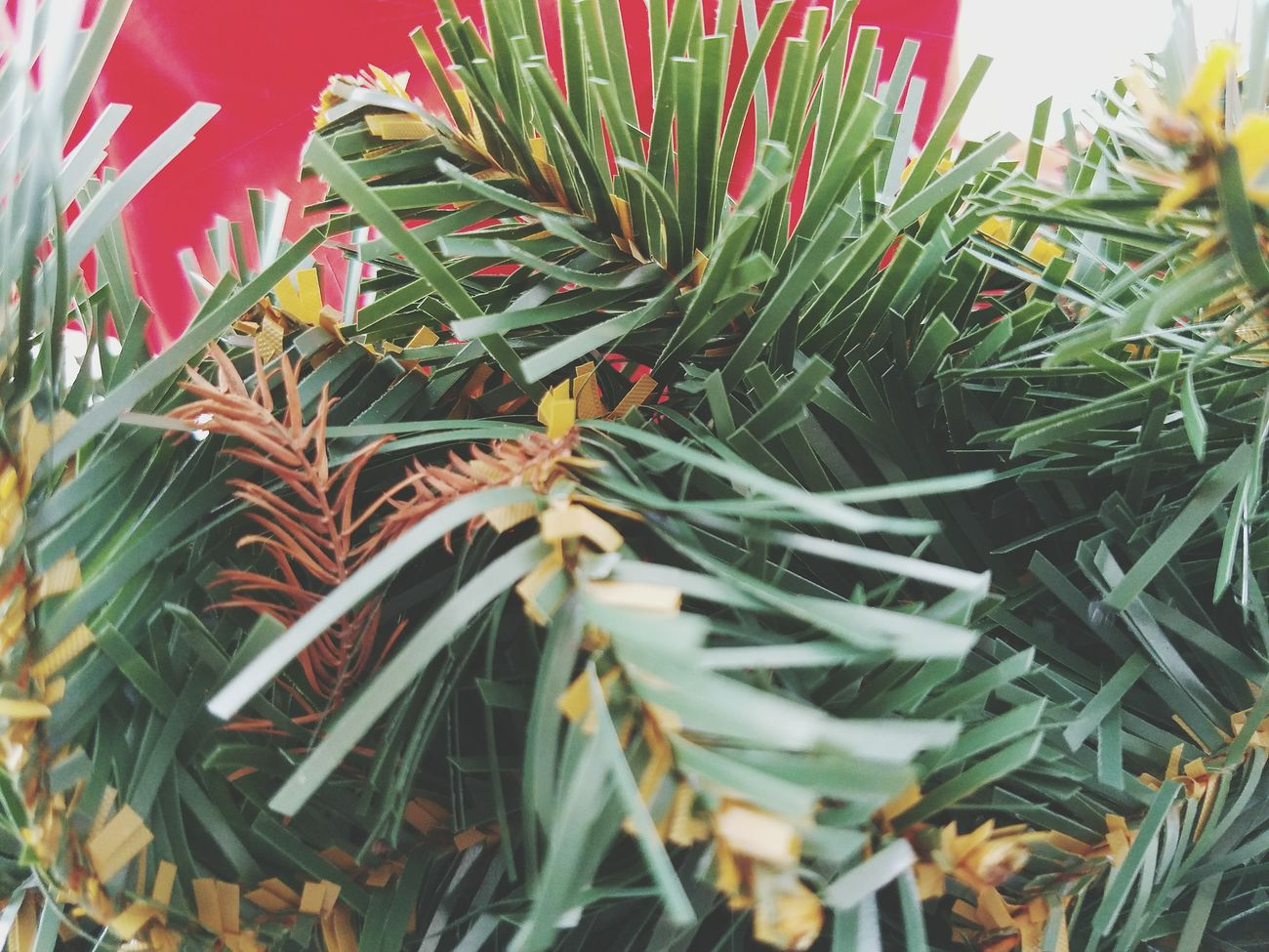 Beauty In Nature No People Growth Nature Plant Leaf Day Outdoors Close-up Needle - Plant Part Pine Cone Freshness Tranquility Unique Perspectives Green Color Green Leaves Green Plant Green Leaf Greenary Red Red Color Red Background Nature Photography