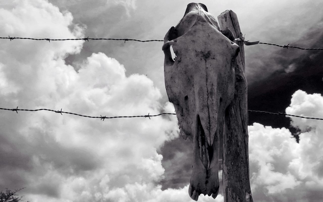 Animal Themes Animals In The Wild Barbed Wire Bnw Bw Close-up Cloud - Sky Cow Cow Skull Day Low Angle View Monochrome Nature No People Outdoors Razor Wire Skull Sky Terror