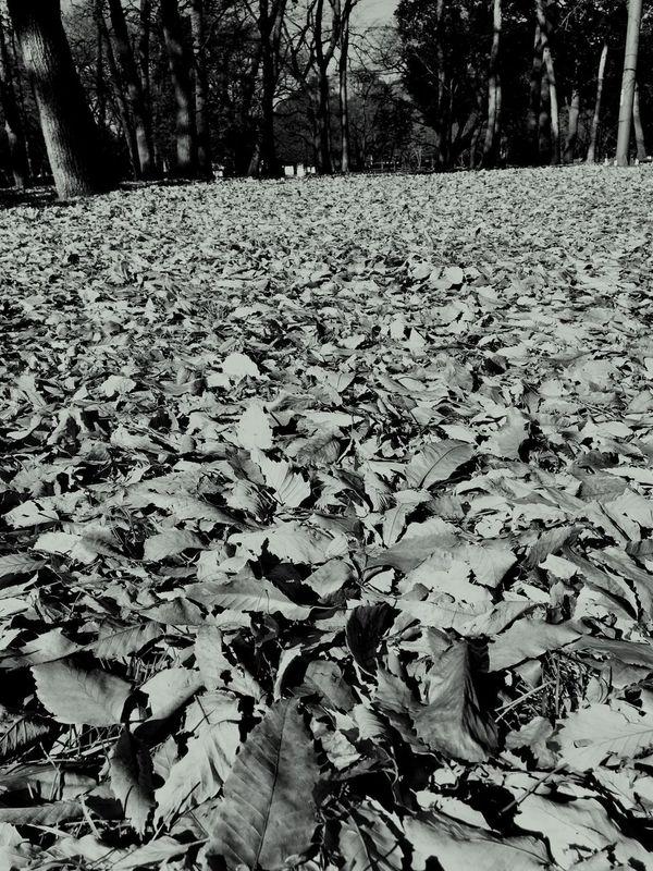 Leaves Winter Landscape Fallen Leaves Hazy Shade Of Winter