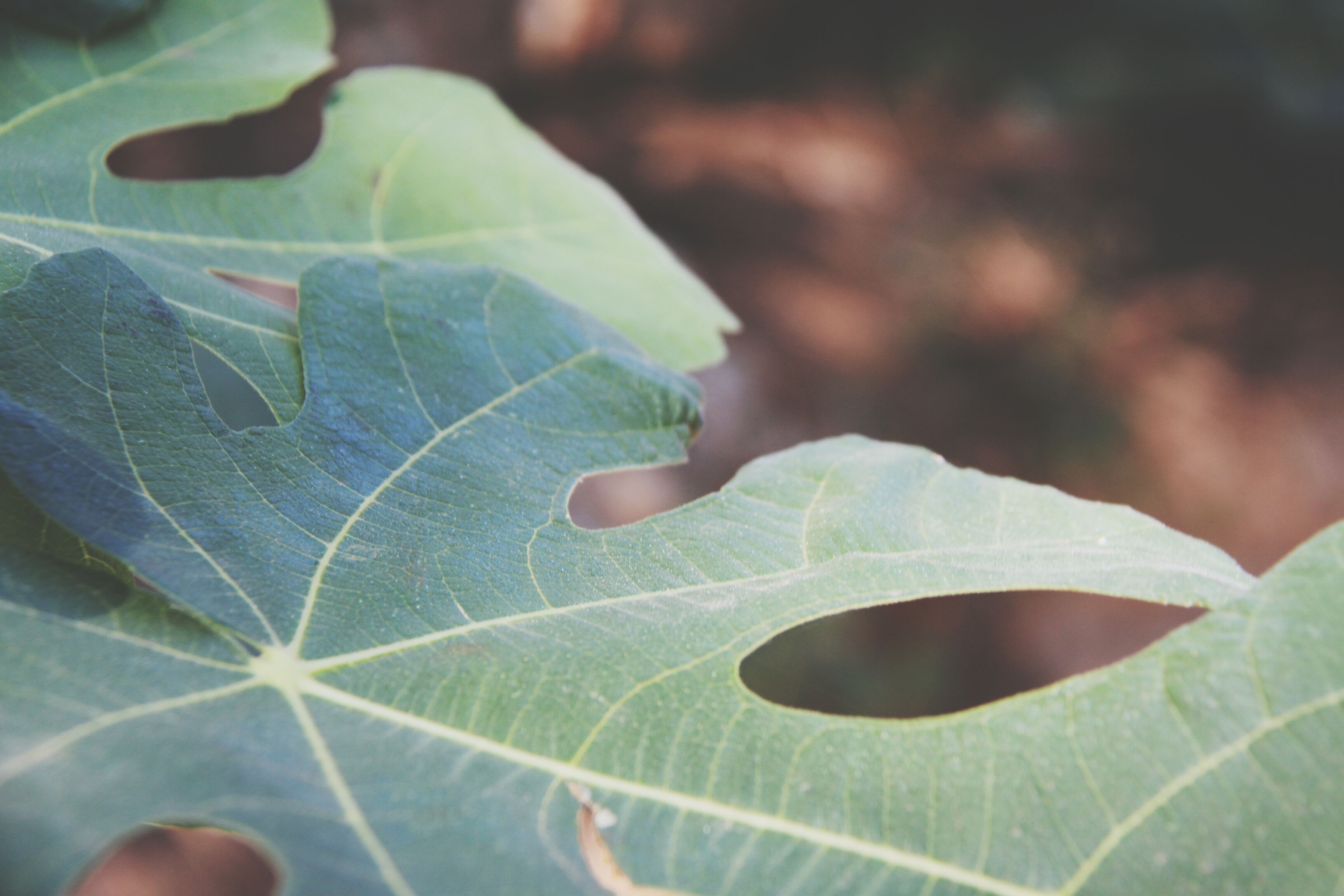 leaf, leaf vein, green color, close-up, person, focus on foreground, part of, natural pattern, unrecognizable person, leaves, plant, nature, cropped, holding, growth, day, selective focus