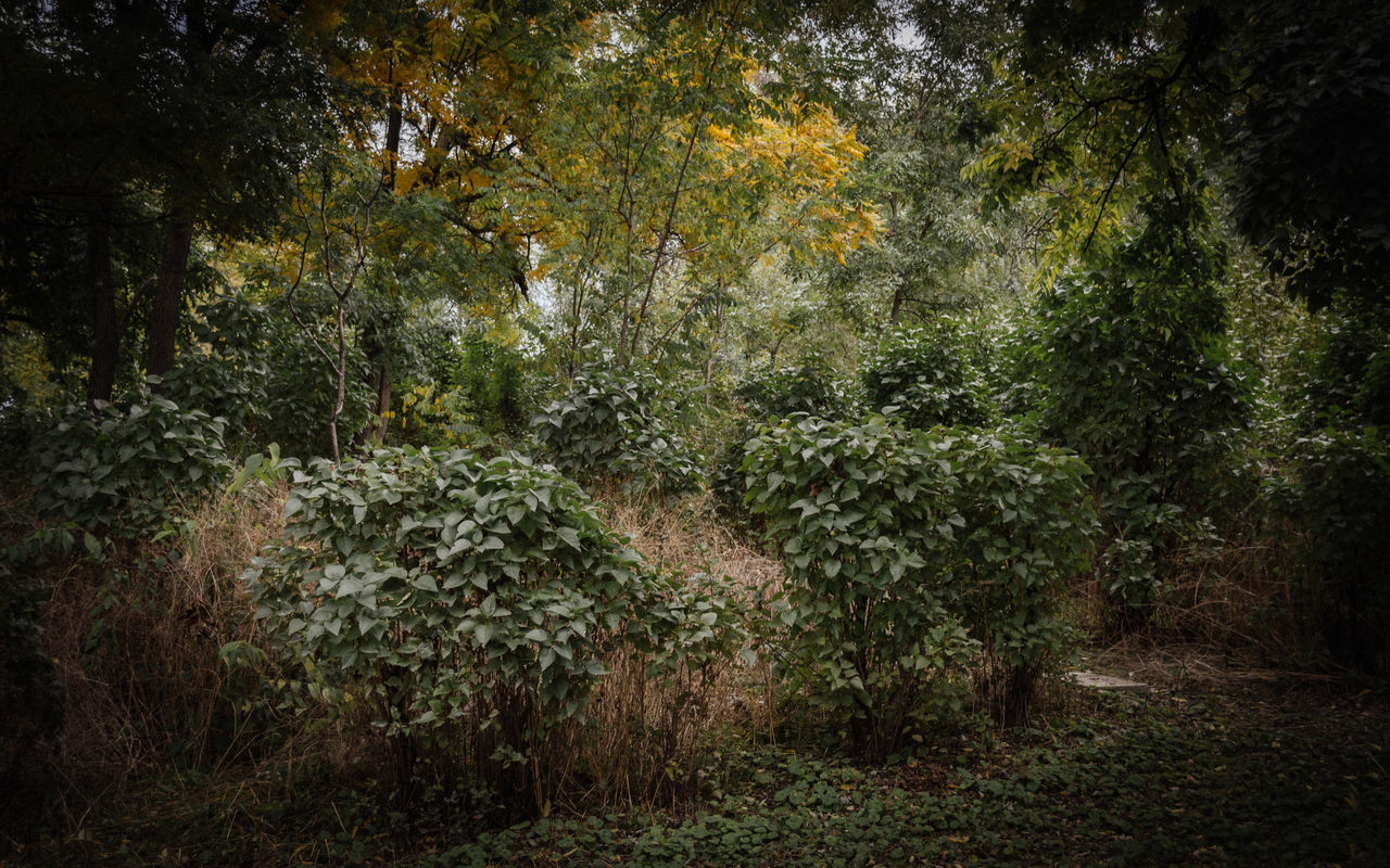 In the forest A Walk In The Woods Bushes Forest Forest Park Forestwalk Growing Growing Growth In The Forest In The Woods Into The Woods Leaf Mystery Nature No People Outdoors Plant The Way Forward Tree Tree And Bushes Trees Trees And Bushes Walking In The Woods Wood Woods