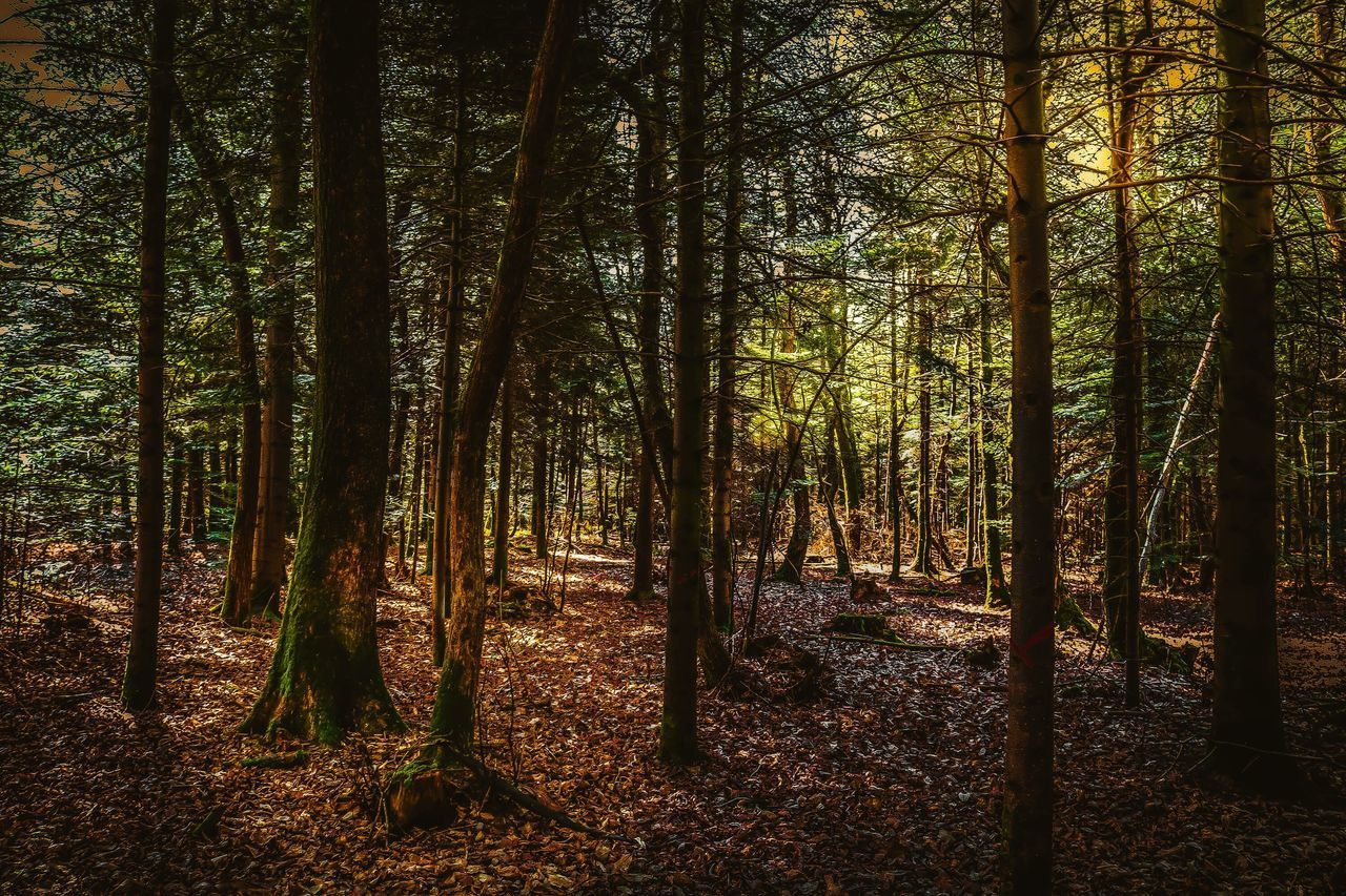 Around the trees ☀️🌲 Forest Tree Nature Spring Wild Tranquil Scene WoodLand No People Sun Calm Tranquility Explore Trees Beautiful Colors Outdoors Outdoor Photography Livefolk Outdoors Life The Great Outdoors - 2017 EyeEm Awards