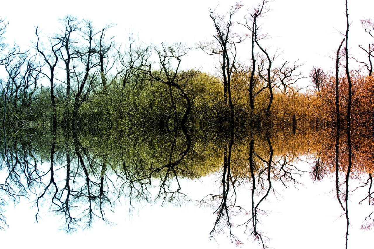 Colour Tree Symmetry Tree Reflection Nature Beauty In Nature Outdoors Branch Water Tranquility No People Day Scenics Bare Tree Sky Photo Art Symmetry