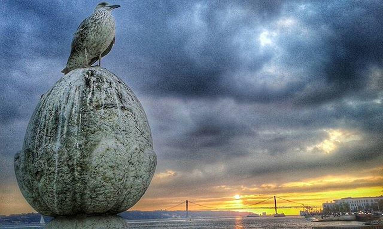 🐥 Seagull Seagullswag Sunset Sunsetterreirodopaço 25aprilbridge Novemberdays Snapseed Snapseedaily Pointofview Lisbon Lisbonlovers Portugaldenorteasul Portugalcomefeitos TerreiroDoPaço Portugal