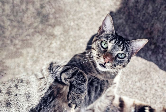 lovely cat best looking Popular Photos Looking At Camera Streetphotography Way Best Food Best  Sunny ASIA Colors Backgrounds Trip Happiness Best Of EyeEm Bestoftheday Thailand Best EyeEm Shot Cat Cats Lovely Pretty♡ Bestoftheday Fashion Stories