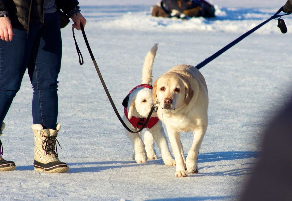 Beautiful stock photos of welpen,  Animal Themes,  Cold Temperature,  Day,  Dog