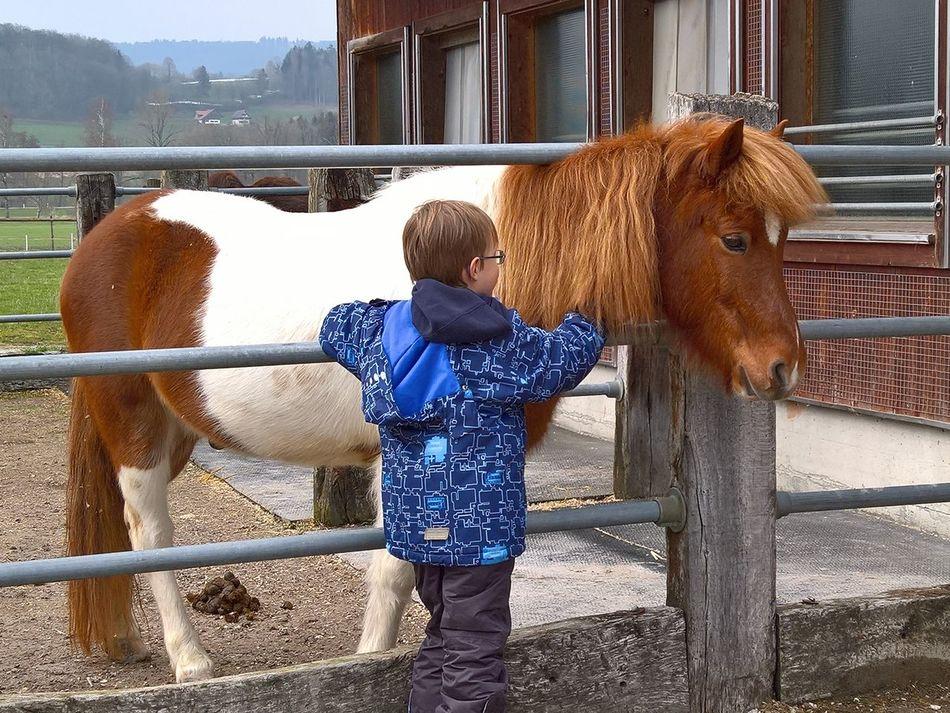 Beautiful stock photos of pony,  8-9 Years,  Animal Pen,  Boys,  Building Exterior