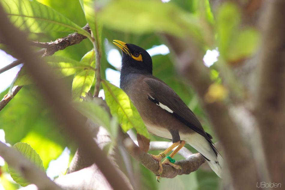 Metro Zoo Beautiful Bird