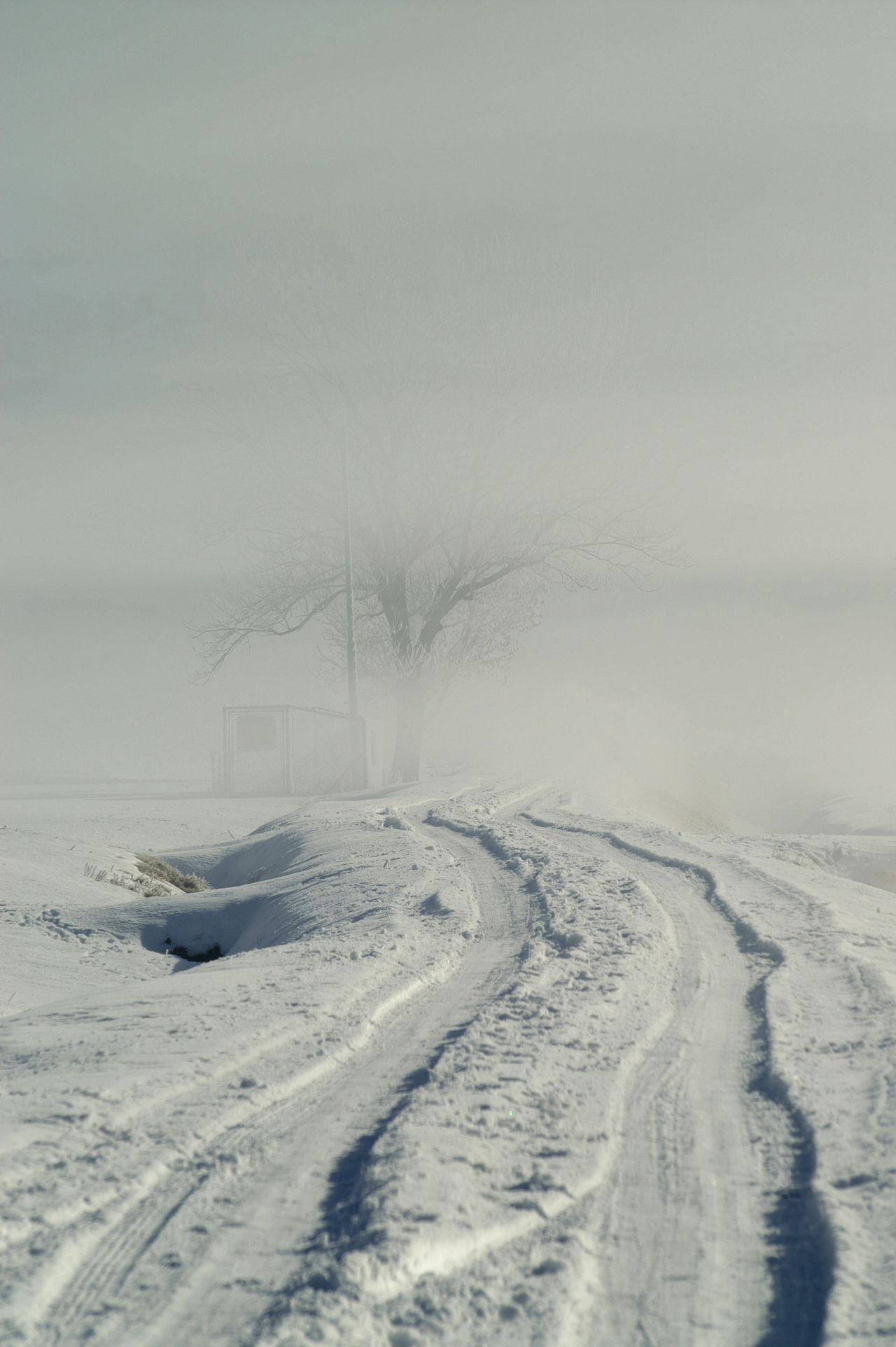 Schweiz Switzerland Wallis Leuk Spuren Im Schnee Tracks In Snow Kalt Cold Cold Temperature Nebel Foggy Morning