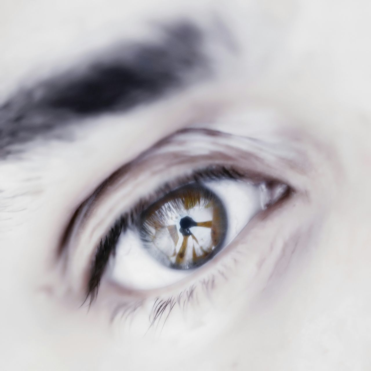 Macro Eye Macro Photography Selfportrait Eye4photography  Me, My Camera And I