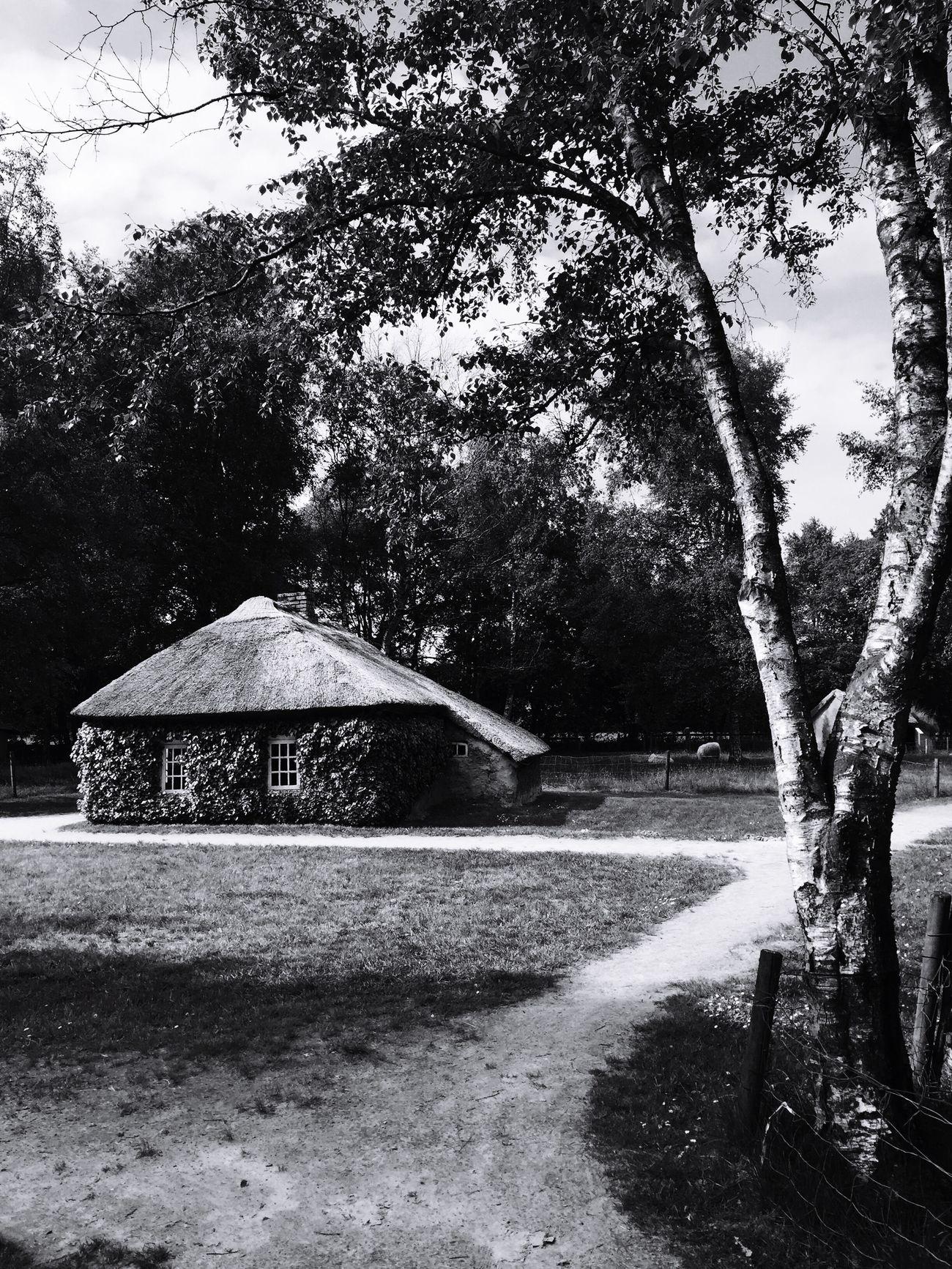 Hometown Bnwphotography EyeEm Best Shots East-frisia Birchtree.rClayhutyHut ClaycBog Moor moor
