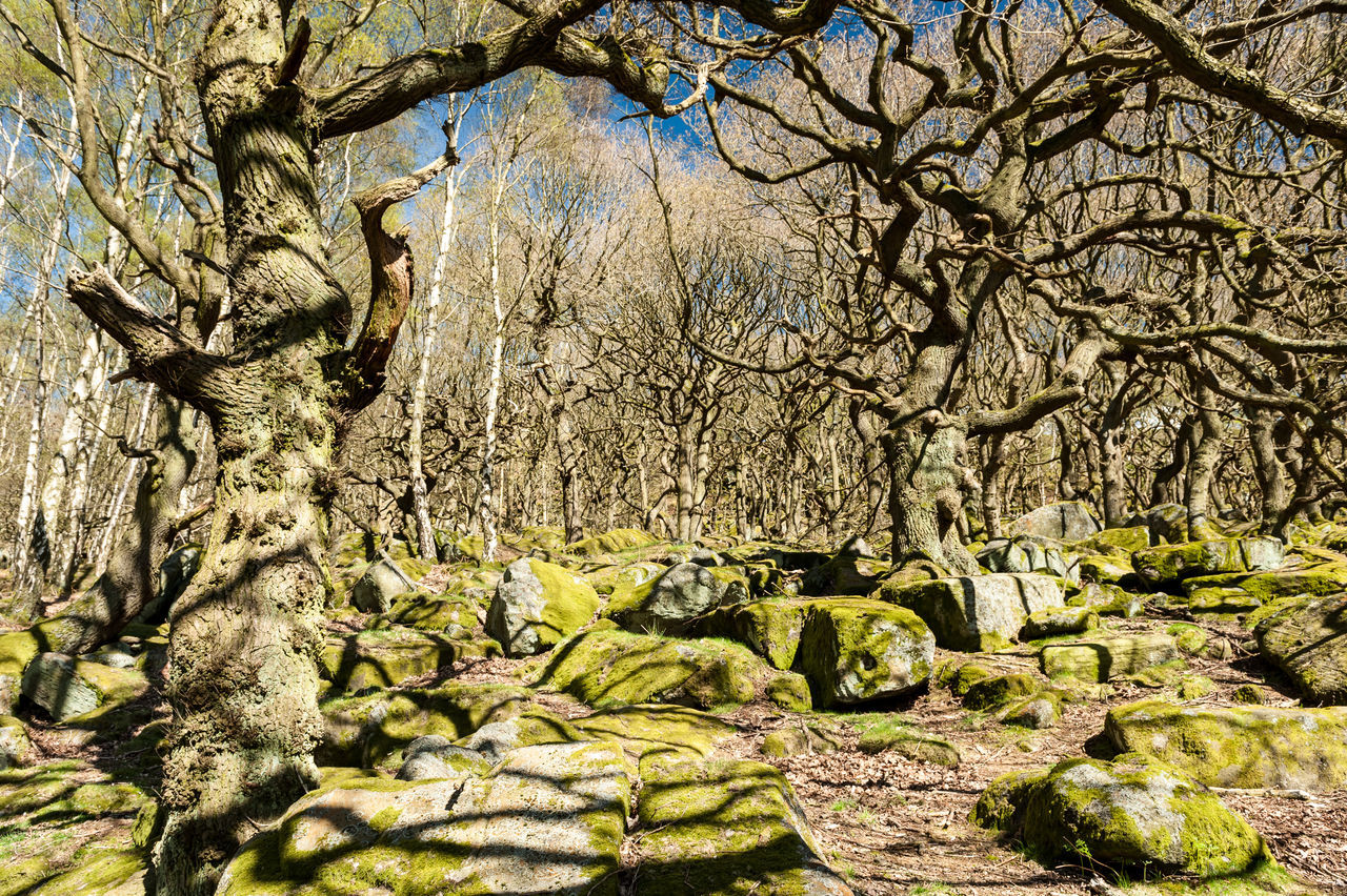 Bare Tree Beauty In Nature Branch Branches And Shadow Derbyshire Green Color Growth Outdoors Peak District  Shadows Tree Trunk Twisted Tree WoodLand
