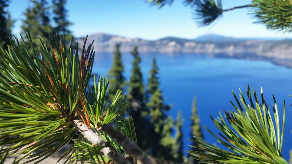 Beauty In Nature Blue Close-up Crater Lake National Park Day Green Color Growth Nature No People Outdoors Palm Tree Plant Scenics Sky Tranquility Tree Water