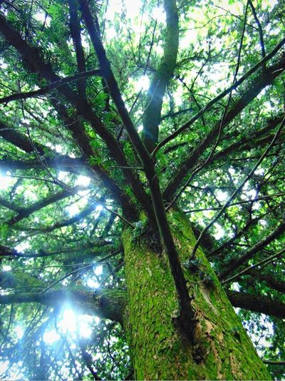 Tree Random Naturelovers Nature_collection Nature Photography Beauty In Nature Walking Around Nature On Your Doorstep Taking Photos EyeEm Nature Lover Greenary Walk Eye4photography  Nature