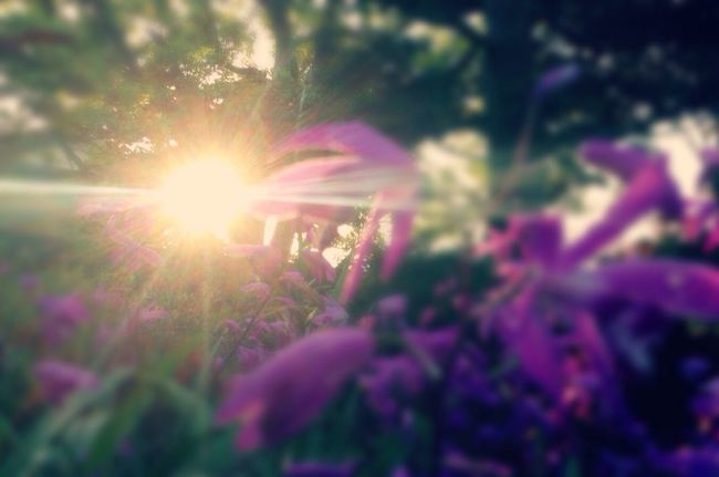 Taking Photos Garden Flower Garden Photography Sunset