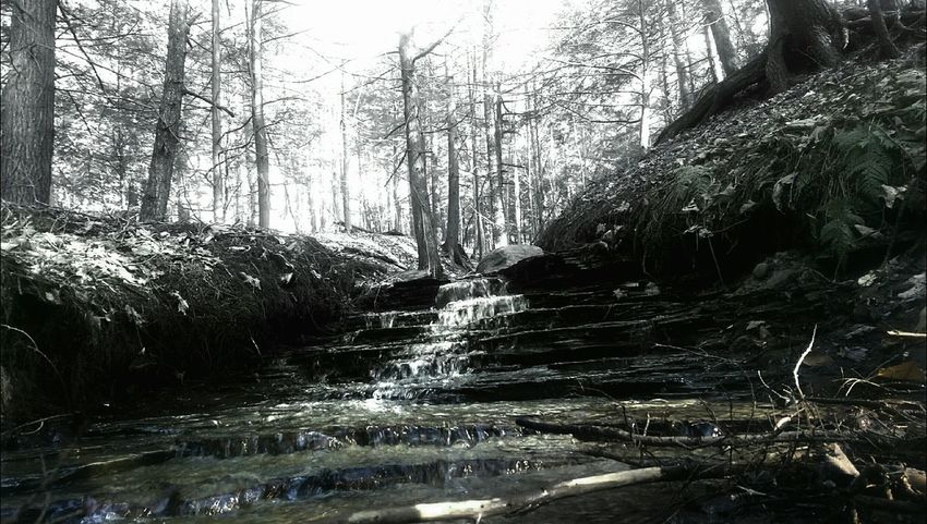 Missing my old backyard Spring Ville Ny, Beautiful place Zoar valley just a fun edit older pic .. Memmories Taking Photos Check This Out Enjoying Life Blackandwhite Mobile Photography Getting Inspired Outside Photography Nature Beautiful TreePorn Water Cool Edit Darkness And Light Screensaver