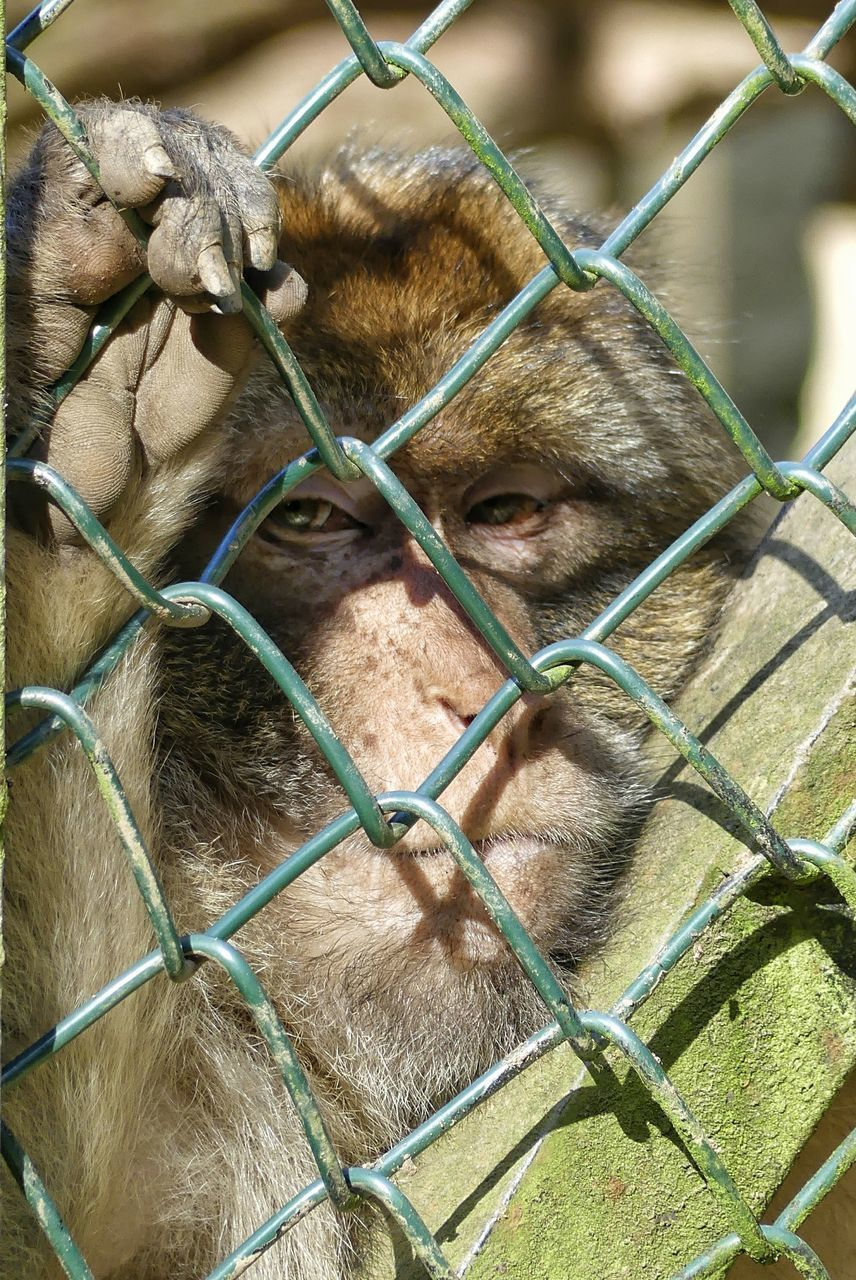 animal themes, mammal, no people, one animal, close-up, day, outdoors, domestic animals, nature