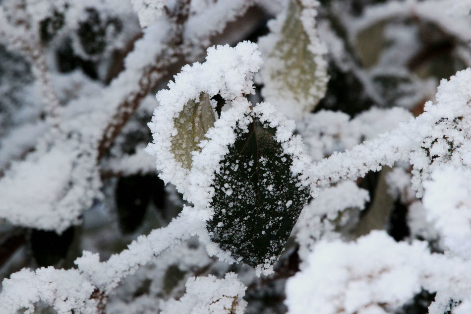 Beauty In Nature Cold Temperature Frozen Nature Outdoors Weather Winter Winterart