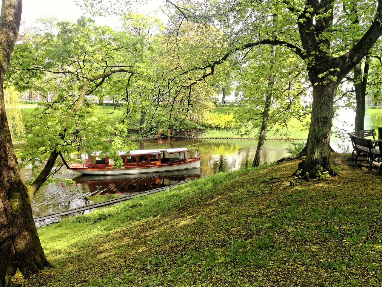 tree, nautical vessel, transportation, water, mode of transport, grass, boat, nature, river, green color, growth, outdoors, no people, day, houseboat, moored, beauty in nature, scenics