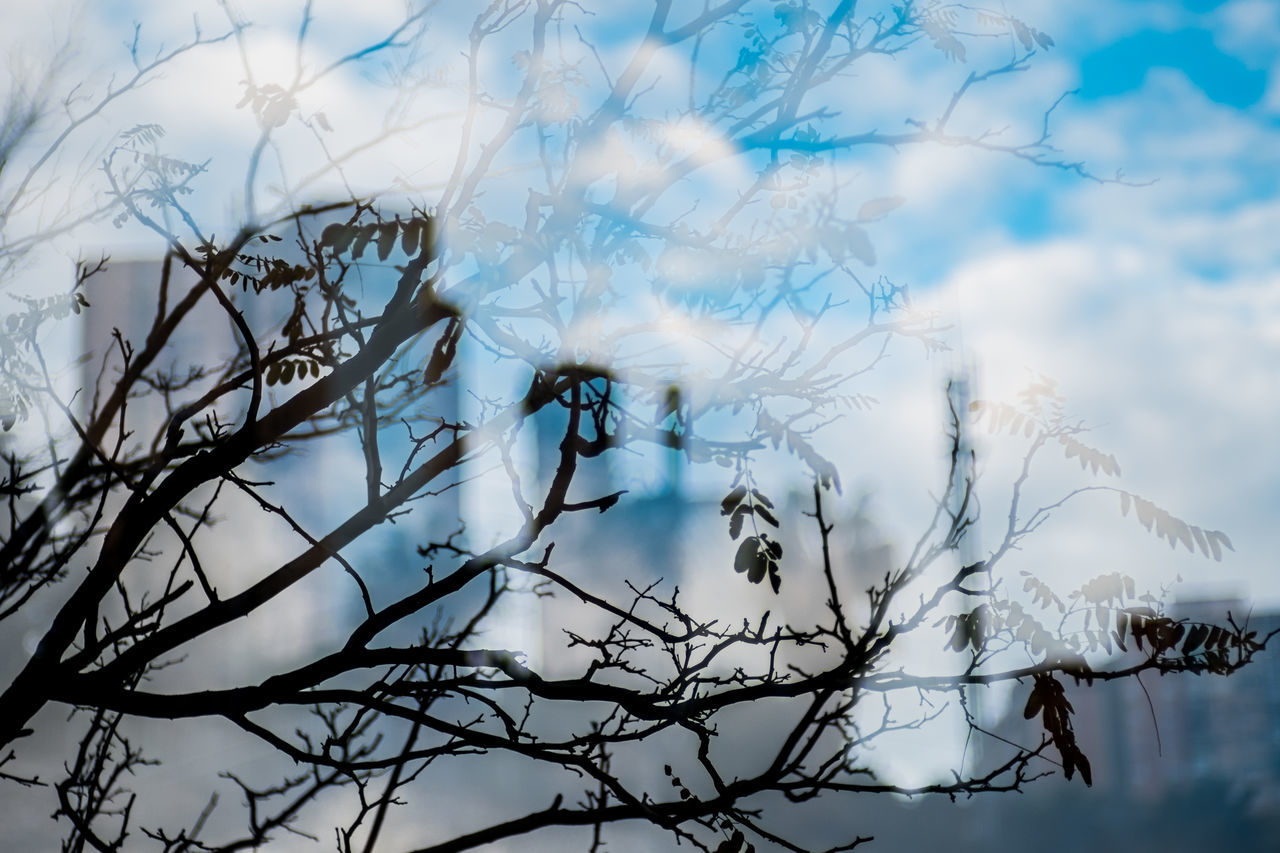 Sky Tree No People The City Light Street Color Fragments Of Life Things I See Double Exposure