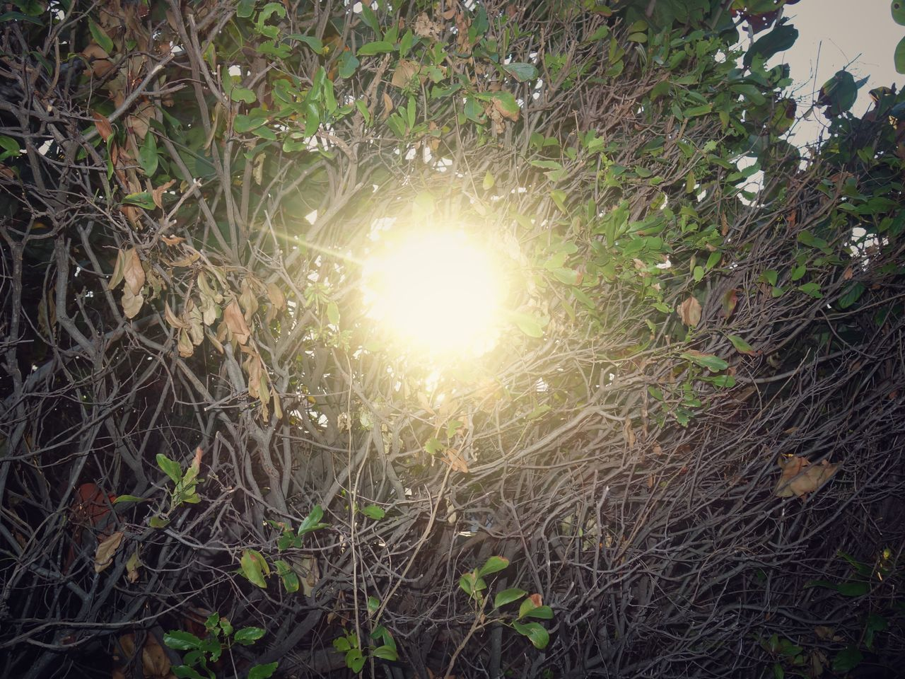 sun, outdoors, lens flare, no people, growth, nature, plant, sunlight, tree, beauty in nature, day, branch, grass, close-up, freshness