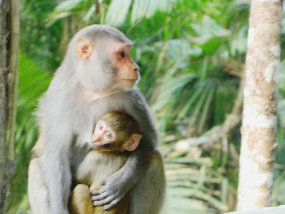 Monkey Monkey With A Baby Pastel Colors Pastel Power Portrait With Atmosphere AMPt_Nature Nature On Your Doorstep Reserve Forest Protecting Where We Play NEM Still Life AMPt - LOVE Exceptional Photographs The Places I've Been Today Me, My Camera And I EyeEm Best Shots - Macro / Up Close EyeEm Best Shots - Nature Childsplay AMPt - Memory Q Mother_child Growing Up Love & Affection  Tenderness The Best From Holiday POV Bonded For Life