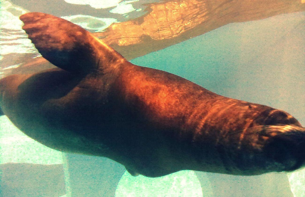 leone marino Sealifeaquarium Hello World Exploring Animals