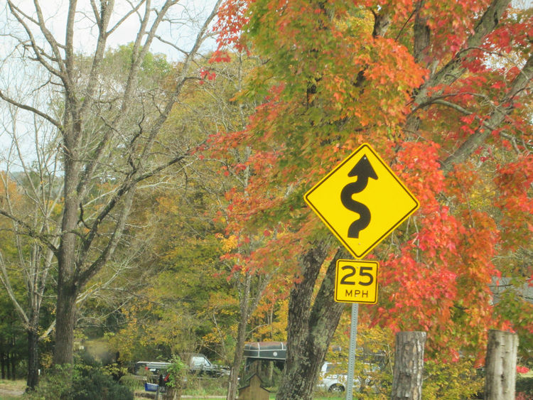 On our home... Colorful Leaves Trees Autumn Branch Colorful Colorful Leaves In Autumn Day Driving Around Driving Home Growth Leaf Nature No People Outdoors Road Sign Road Trip Roadtrip Scenics Sky Tree Yellow